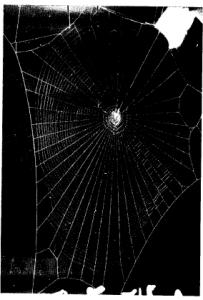 lsd spider web