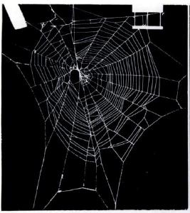 mescaline spider web